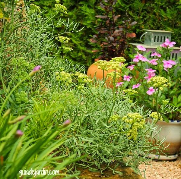 Clasificaci n de las plantas seg n su tama o guia de jardin - Plantas de jardin fotos ...