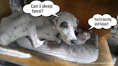 pongo, hidey, sleep, cat, dog