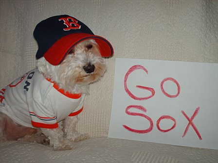Most Adorable Animal Sports Fans