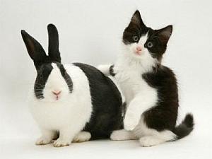 Imagenes Graciosas de Animales, Conejos