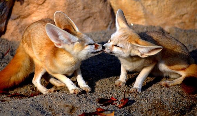 Funny Cute Animals Kissing Latest Pictures | Funny And Cute Animals