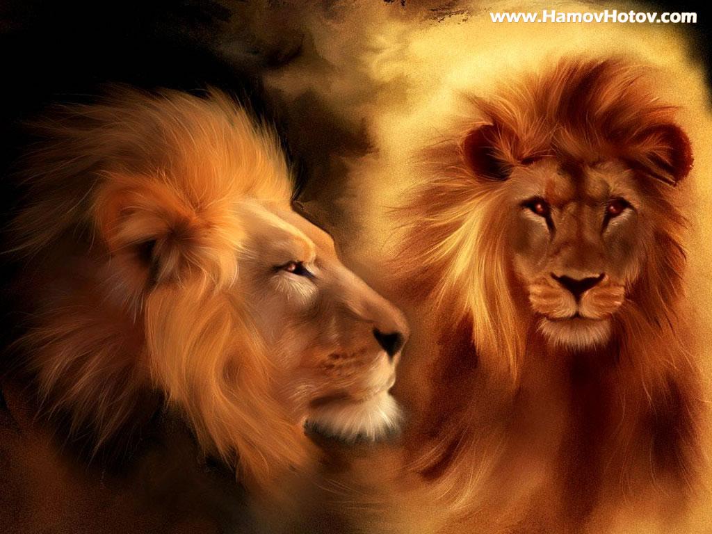 Lion pictures wallpaper - photo#15