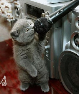 Funny Picture of Animals : Animal Sing3