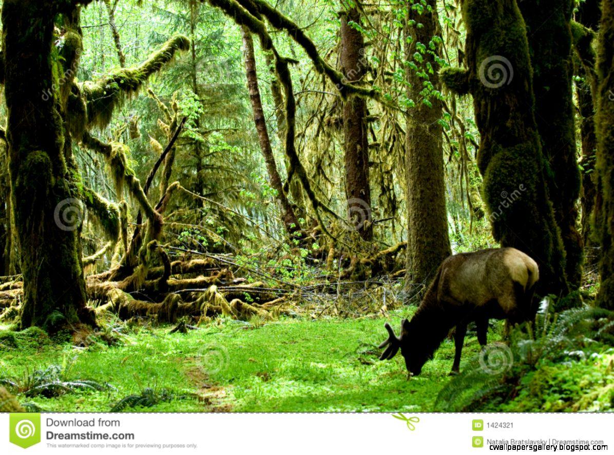 Rainforest Habitat Stock Image   Image 1424321
