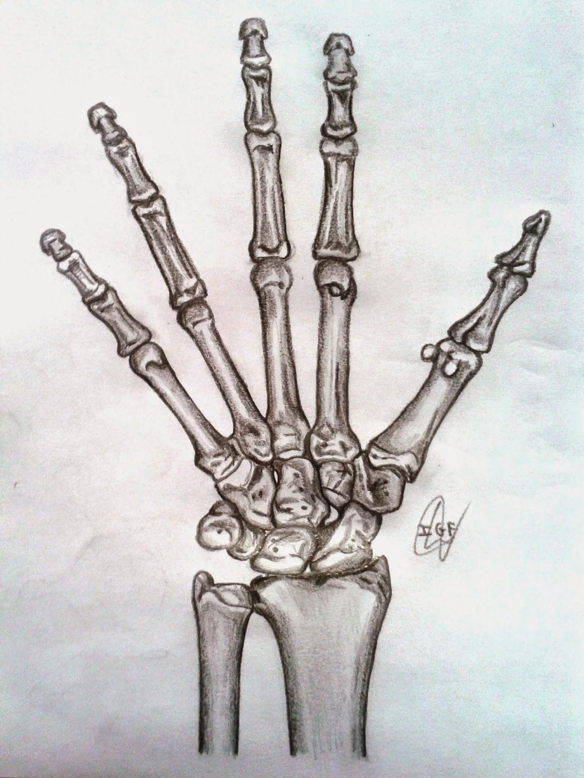 Gantxegi\'s Anatomy: Mano derecha: vista anterior (palmar)