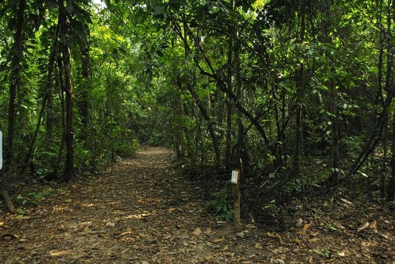 Trilha no Jardim Botânico do Recife