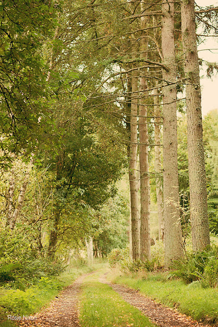 Perthshire | Big Tree County