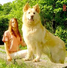 World's-Biggest-Dog-Pics-6