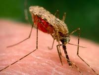 Nyamuk Berbahaya Anopheles