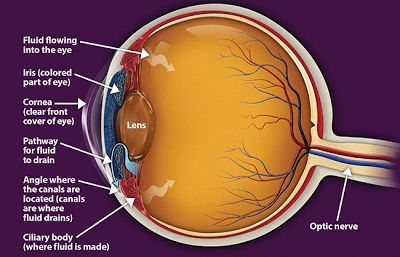Statins  Reduces Glaucoma Risk in PatientsOpen Angle Glaucoma Eye