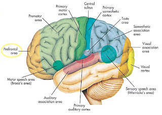otak juara resolusi