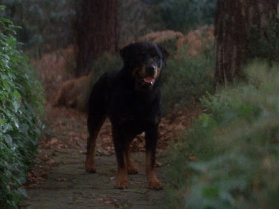 the horror dogs the omen 1976
