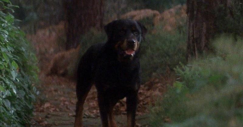 Damien Movie Dogs