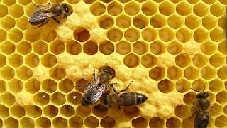 panel nido de abejas