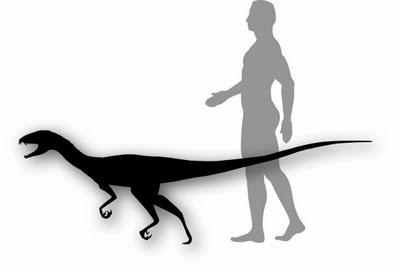 http://3.bp.blogspot.com/-Wu9A7jHHkSI/TaPPncvQPEI/AAAAAAAAA_Y/XRQm__exRfA/s400/Daemonosaurus_size.jpg