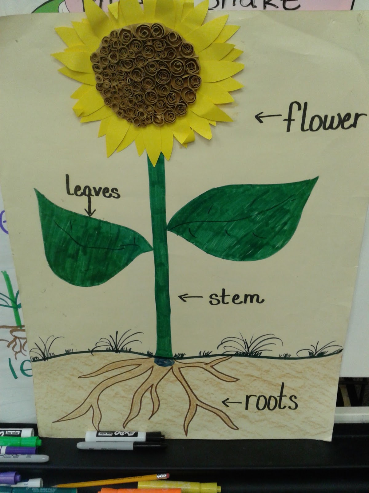 Bd E E A C together with  likewise Sunflowers Poem Karin Best furthermore Flower Chart together with Seed Needs. on plant life cycle poem