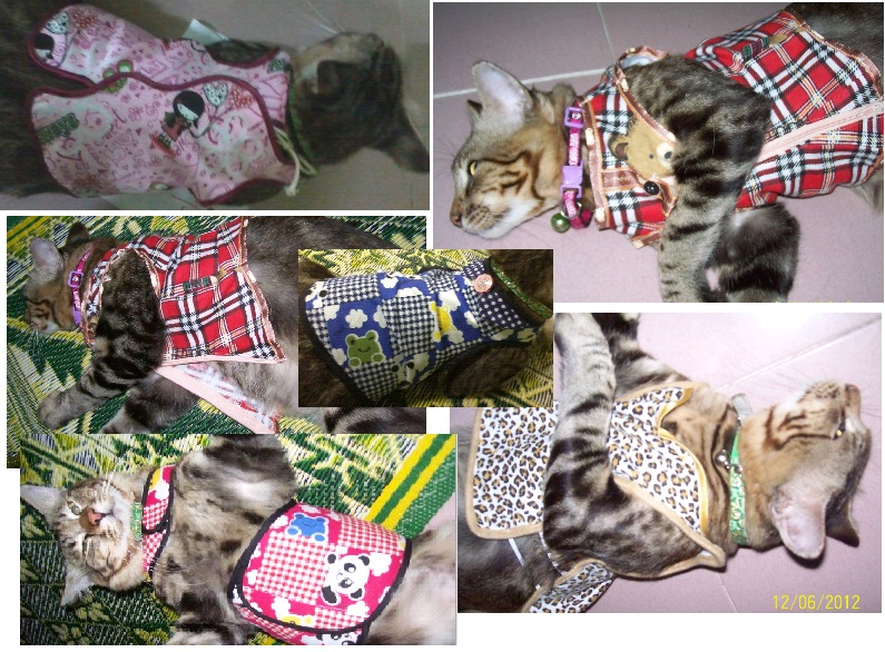 Creative Corner 20 Helai Baju Kucing Released To