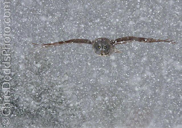 SNOWFLIGHT