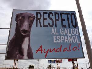 Respeta al galgo español.