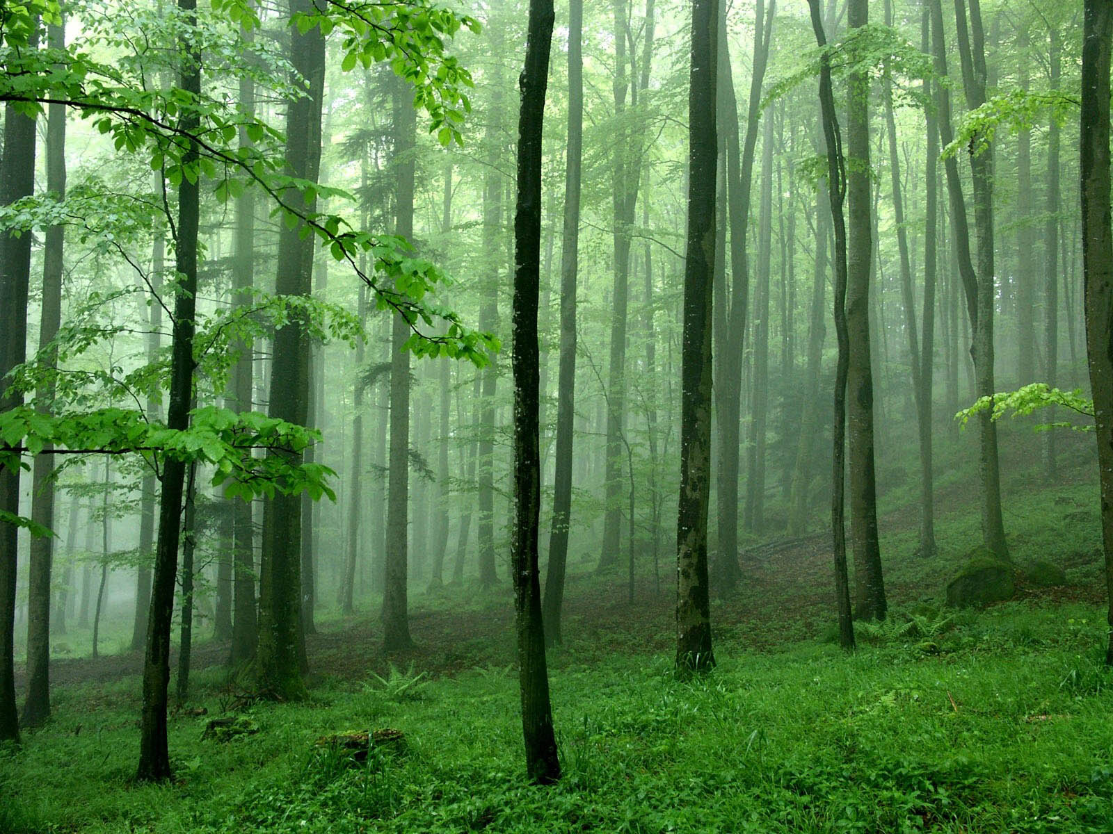 green tree forest - photo #14