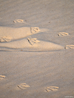 gull prints in sand