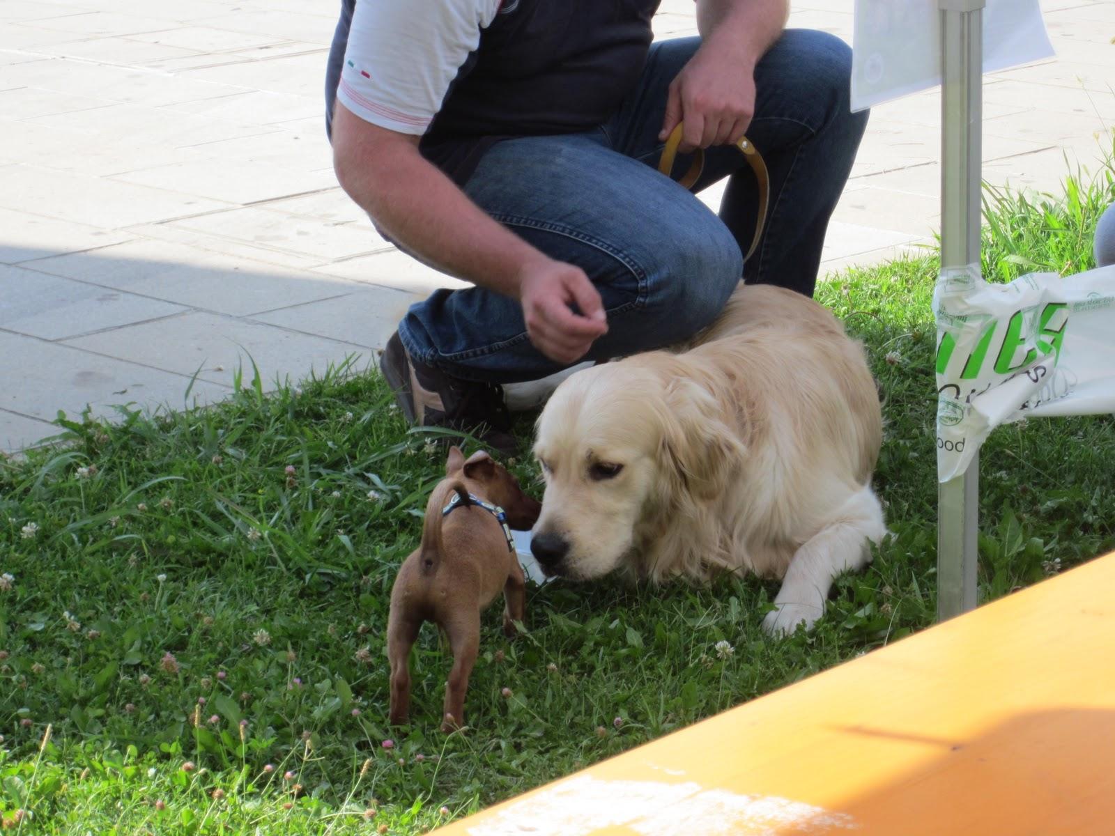 Brain animal educazione e benessere per te ed il tuo pet for Cerco dog sitter