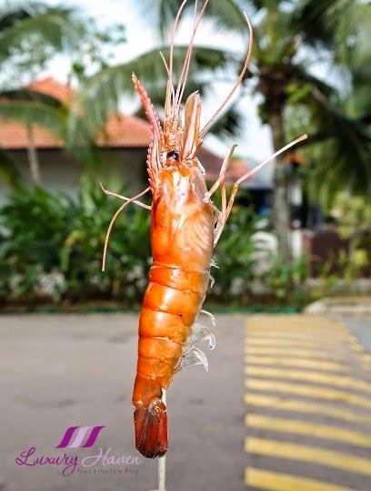 singapore kranji farm resort delicious bbq prawns