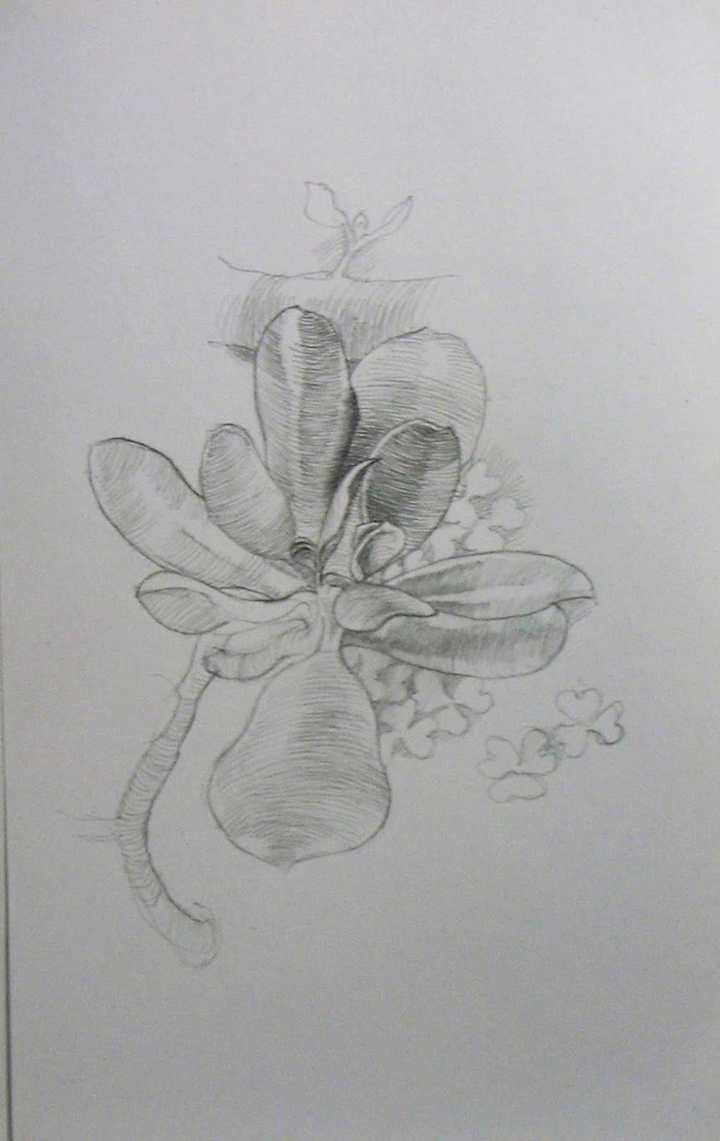 Estudio de Planta.