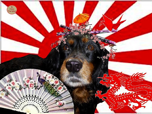 Molly The Wally Goes To Japan.
