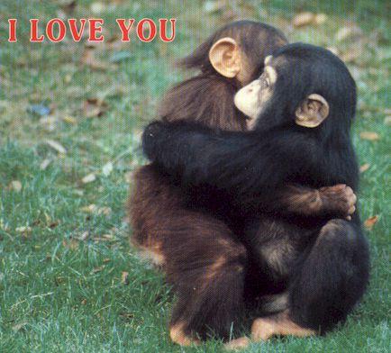 Funny Animals: Cute Monkey