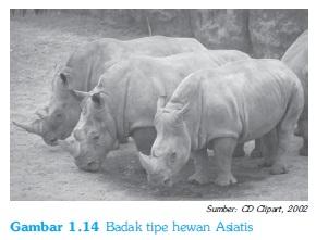 Badak sebagai fauna asiatis sebagai  hasil pembagian fauna menurut wallace