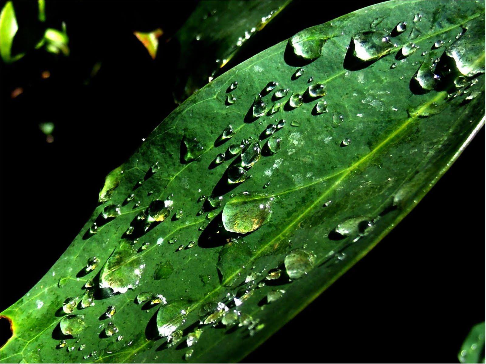 Poetic Shutterbug: Watery Wednesday - Dew Drops On Leaf