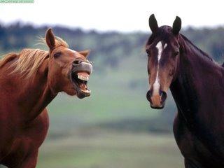 Dos caballos riéndose