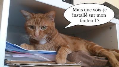 Lionel, le chat rouquin a vu un ennemi.