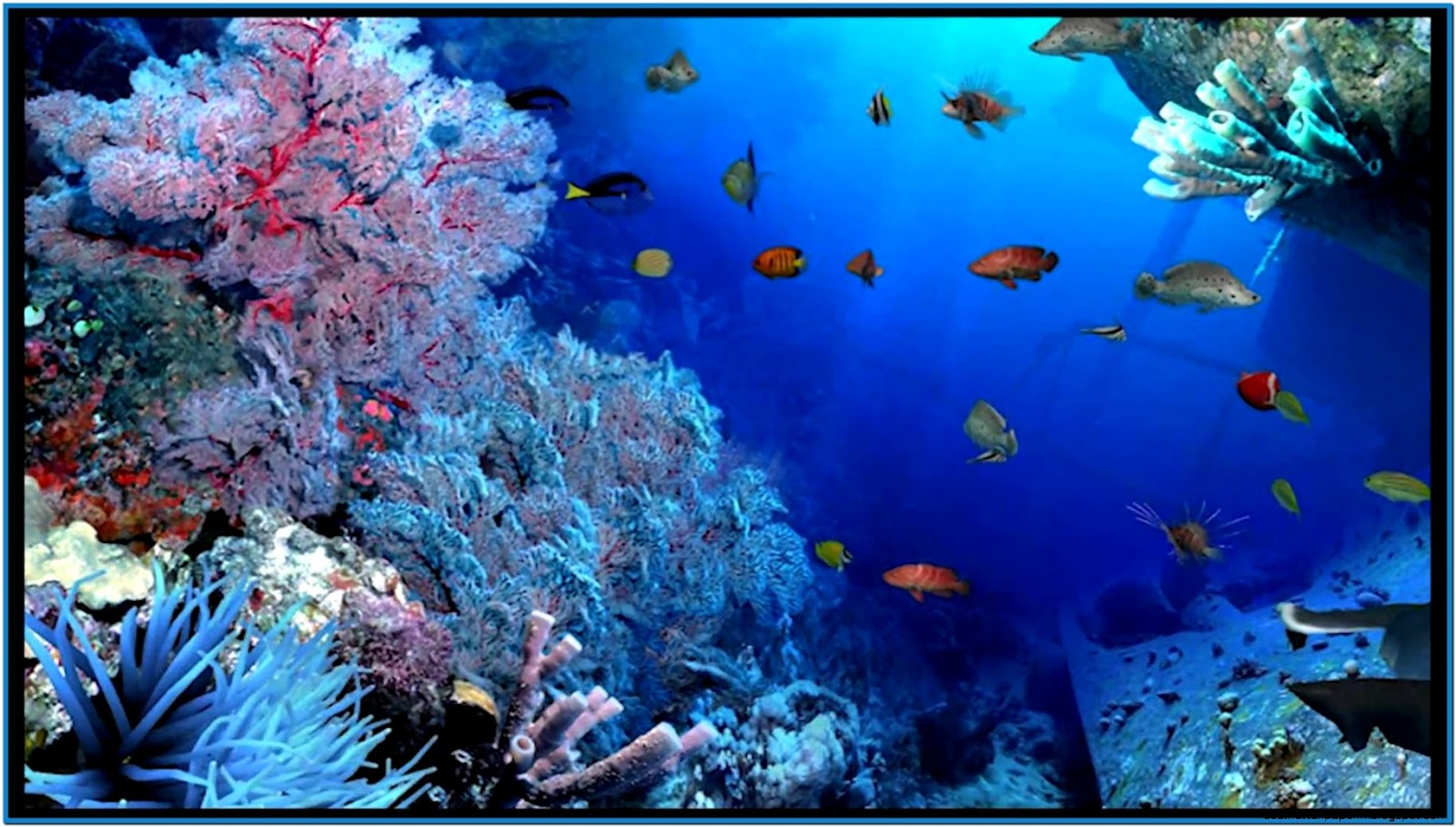 aquarium screensavers 3d wallpaper best hd wallpapers