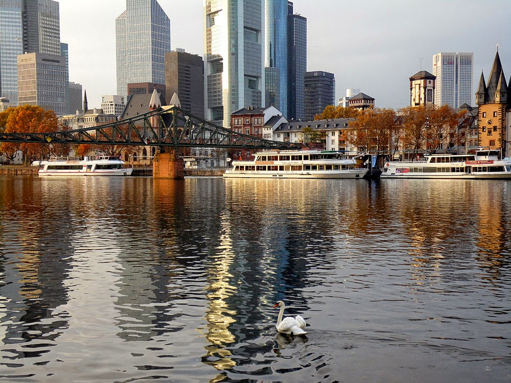Frankfurt, River Main, skyline, and swan