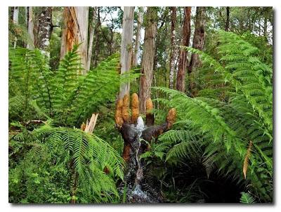 Las esculturas mágicas de Bruno Torfs - Marysville Australia - Jardín de esculturas18