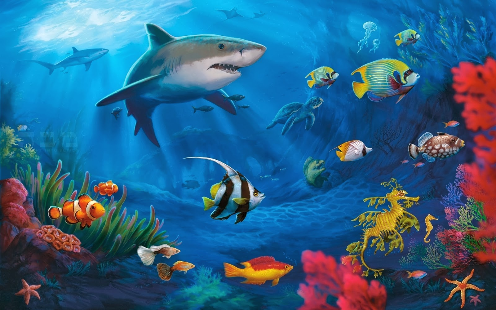 Fish Ocean Animals Underwater