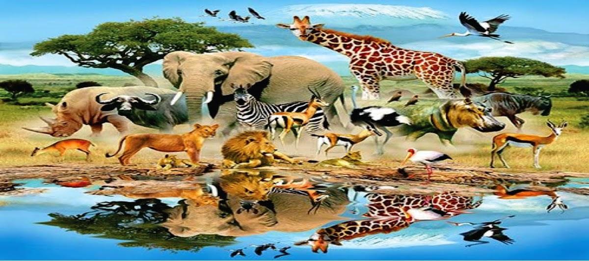 sociedadedosanimais.com.br/pesquise-e-conheça-um-pouco-sobre-os-animais
