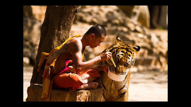 Tiger and Monk together