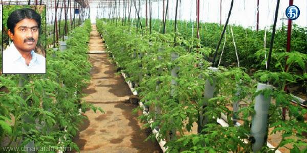 நம்ம ஊரு சாதனையாளர், படித்ததில் பிடித்தது 15 நாளில் 30 டன் தக்காளி அறுவடை: கோவை வேளாண் பட்டதாரி அசத்தல் Namma Ooru record holder, took 15 days to read the 30-ton tomato harvest: Expression of Agriculture Graduate stunning Sathyamanagalam: Tower of soil in agriculture, 15 days to harvest 30 tons of tomatoes developed method, Coimbatore young agricultural graduate. Vatavalliyai from Coimbatore pirapucankar (41). He completed graduate studies at the University of Agriculture, Agricultural Engineering, Pune for the last 15 years has been implementing modern agricultural projects. In the lower area of cultivation in order to make profits by taking Tamil Nadu Agricultural University with the help of the Director of the Agri-Business Development in eroponiks Tower agriculture (soil agriculture) that relies on modern technology. All kinds of vegetables can be grown throughout the year, even if the weather is hereby says. Erode district cattiyamankalattai next talavati tikinarai village in the mountainous region of tomato cultivation in the system, he added that: an acre of land is usually only 5 thousand tomato seedlings can be transplanted.