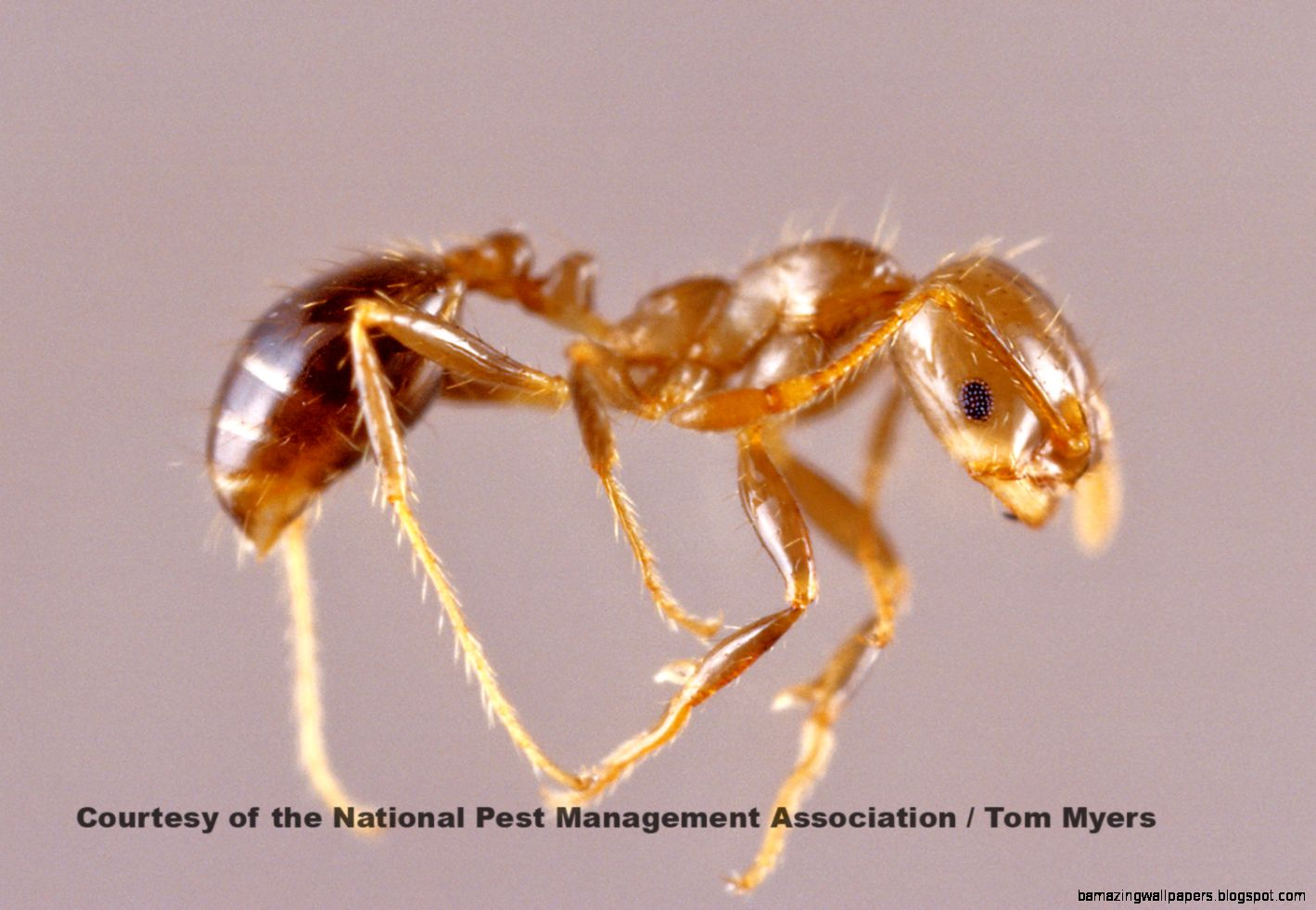 Ants   Facts About Ants   Types of Ants