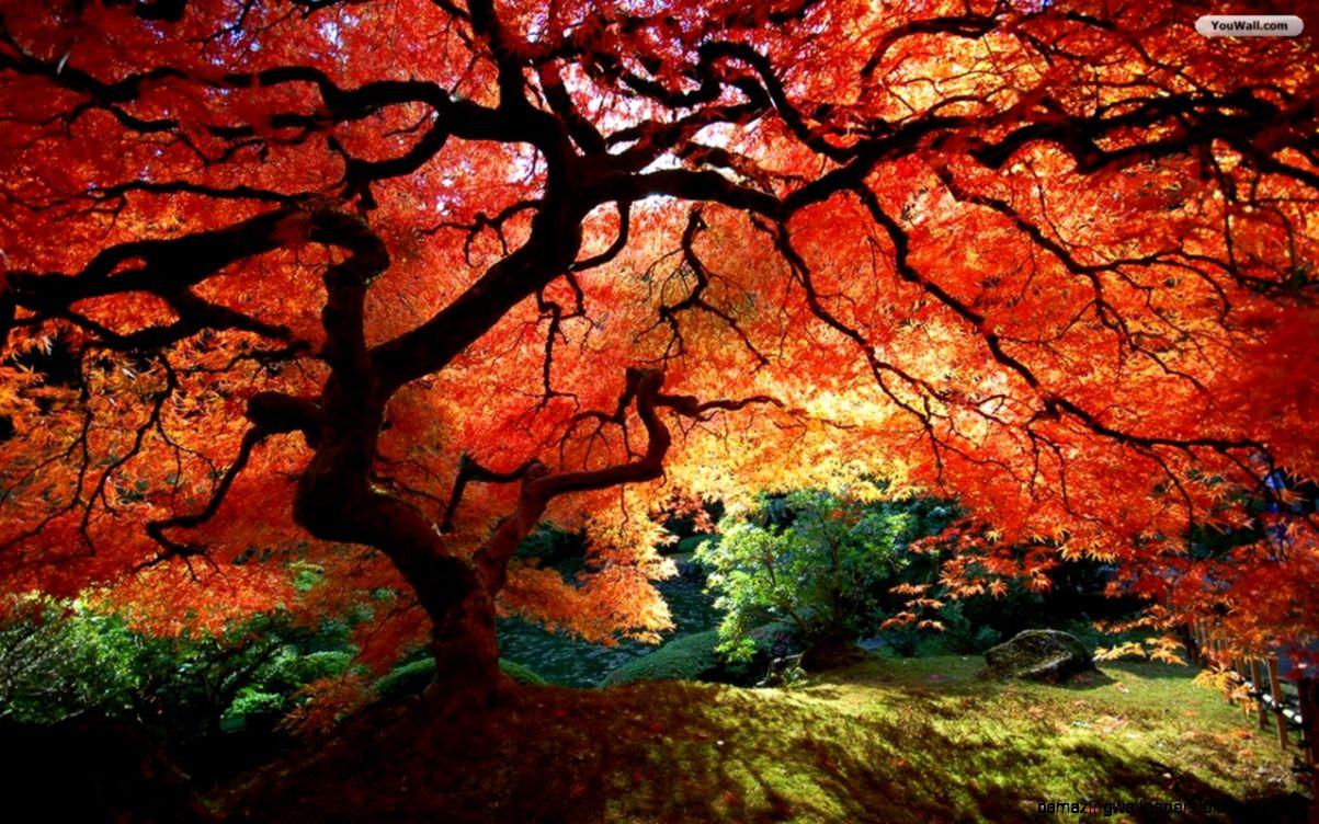 Autumn Trees Wallpaper   WallpaperSafari