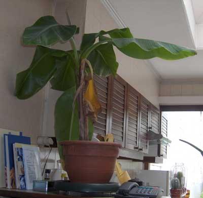 Garden center ejea plantas para nuestros espacios for Plantas de interior madrid