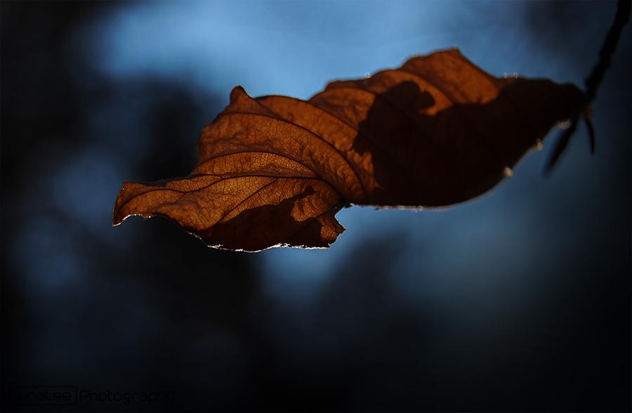 Braunes Blatt
