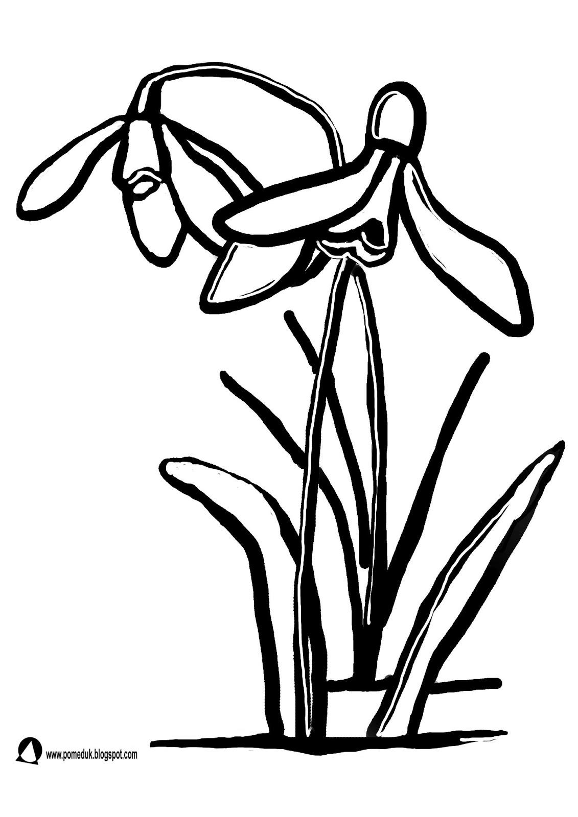 Pomeduk Wiosenne Kwiaty śnieżyczka Przebiśnieg Kolorowanka