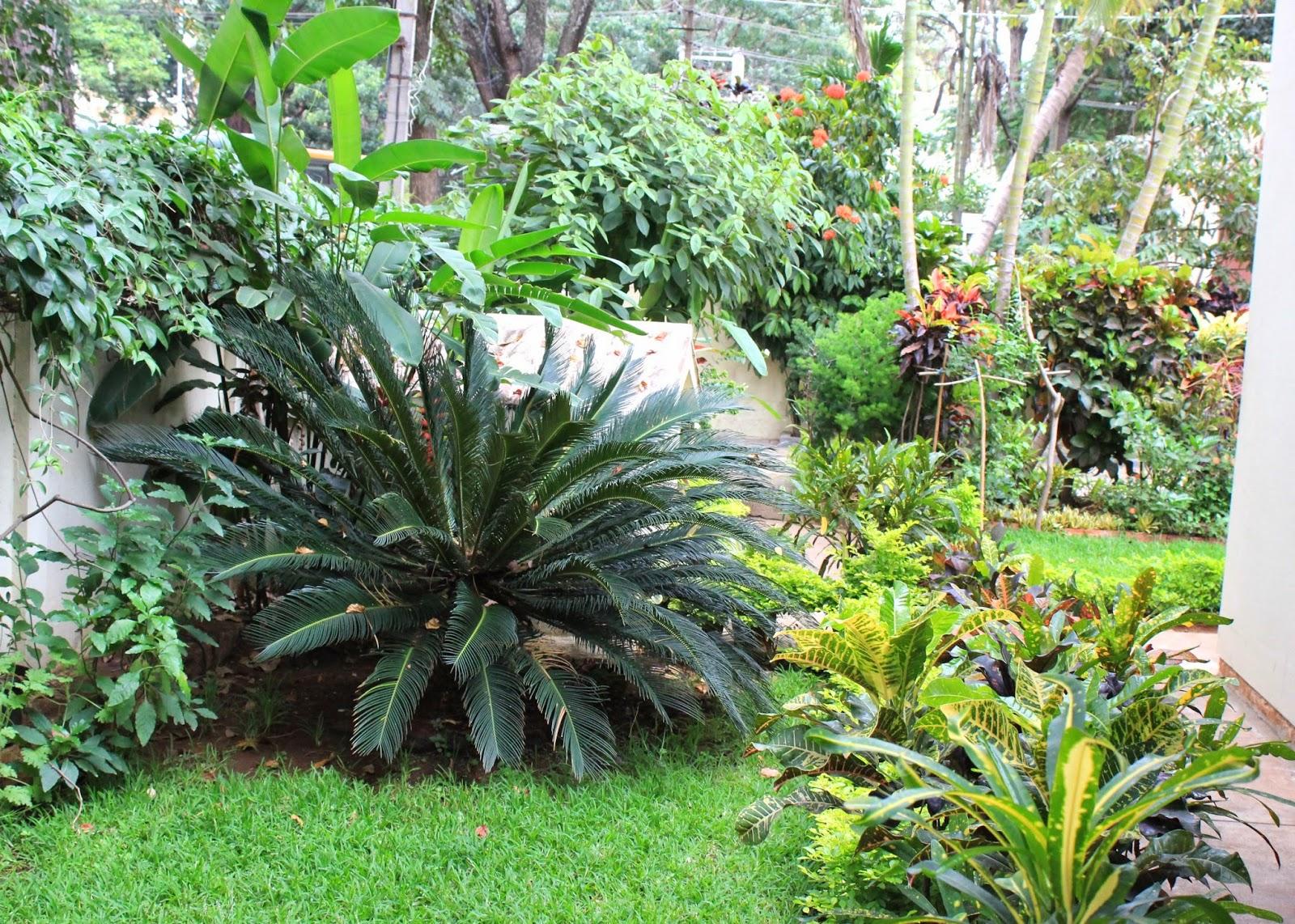 red house garden: an indian garden