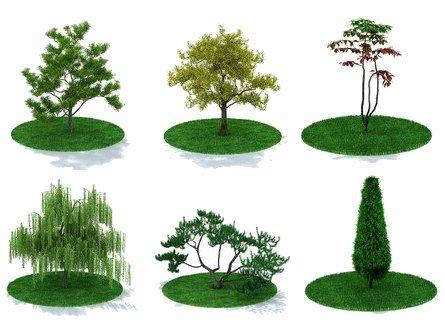 Plantas y flores plantas especies jardines for Arboles para macetas de exterior