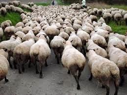 Të kërkuarit siguri shpesh do të thotë se jemi duke shkuar pas turmës