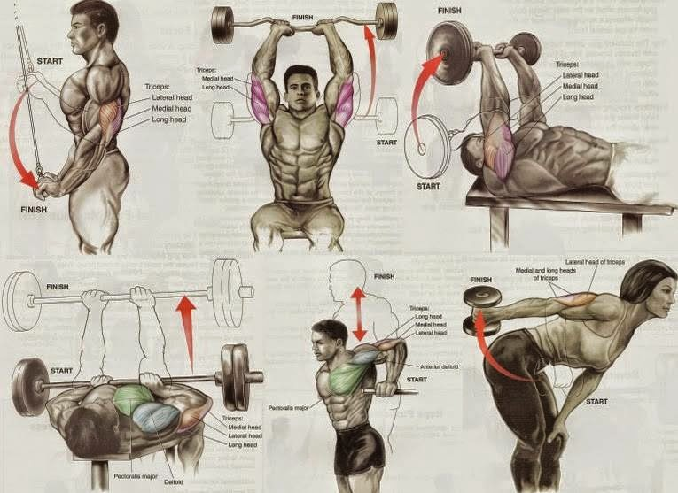 Triceps Exercises For Mass